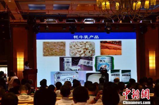 图为2017中国牦牛乳产业发展论坛现场。 崔琳 摄