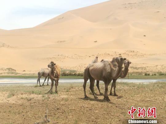 图为金昌市巴丹吉林沙漠。 南如卓玛 摄