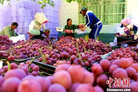 资料图。图为敦煌市郭家堡镇七号桥村农民正在将葡萄装箱。 张晓亮 摄