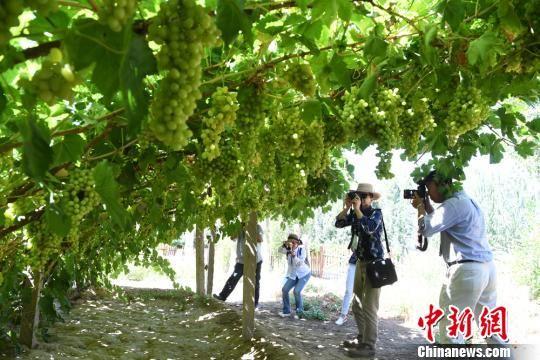 图为华文媒体负责人在葡萄园拍照。 杨艳敏 摄