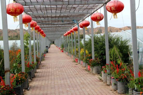 图为山丹县祁店村果蔬生态示范园