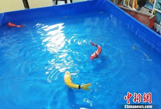 由兰州经济技术开发区携手兰州交通大学打造的大学生实训基地里,融合了人工智能、传感器等先进技术的仿生机器鱼,在水中似真鱼般灵活游动。 徐雪 摄