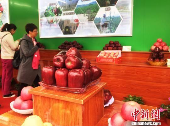 图为展示的花牛苹果。 徐雪 摄