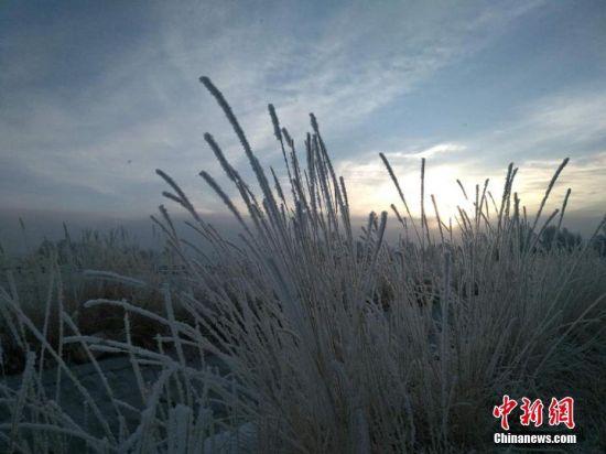 清晨阳光初现,田野披上银装。 乌仁花 摄