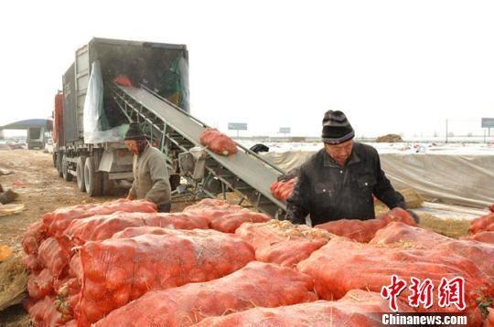 图为农户搬运待发往越南河内的特色农产品。 钟欣 摄