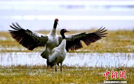 资料图:图为甘南州尕海国际重要湿地。 张勇 摄