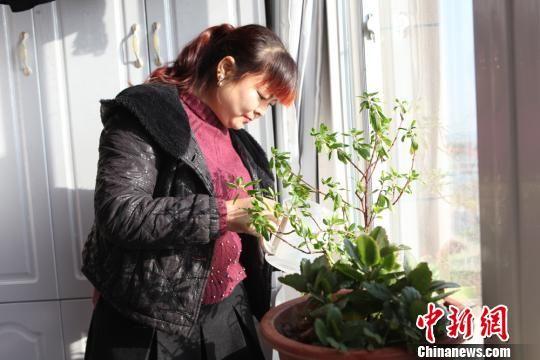 资料图:2017年9月,张亚丽夫妇在无担保的情况下从中国农业银行贷款14万元住进了85平方米的新家。图为张亚丽在新家里浇花。 吴锋 摄