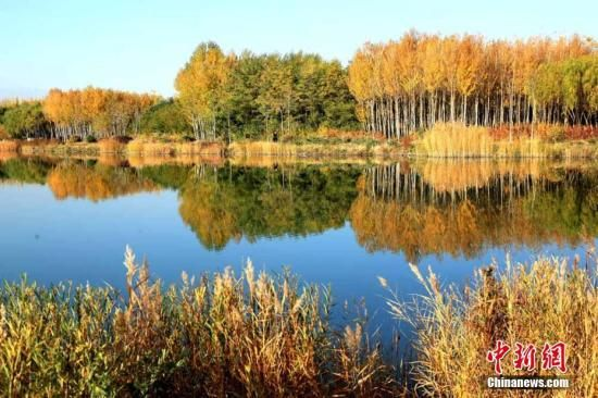 """深秋时节,地处祁连山下的甘肃千年古城——张掖,秋意浓浓,金黄的杨树、火红的枫叶倒映在湖面,天蓝水清,各色树叶""""争奇斗艳""""呈现出色彩斑斓的秋景。 陈礼 摄"""