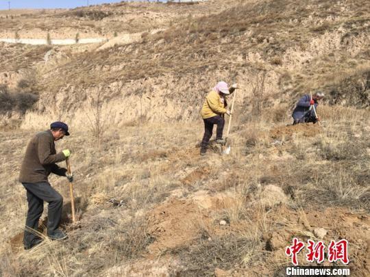"""刘善忠雇用本村劳动力,挖坑、栽植、培土、浇水、除草、打药""""一站式""""工作,保证栽植一片,成活一片。 张婧 摄"""