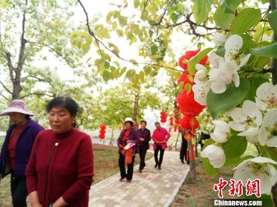 当日,来自和政县周边的数千游客和摄影爱好者齐聚15亩梨园之上共赏美景。 闫姣 摄