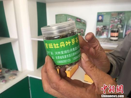 图为临夏市王坪村油用紫斑牡丹种植农民专业合作社负责人何生宏几年前开发出的紫斑牡丹叶芽茶。 张婧 摄
