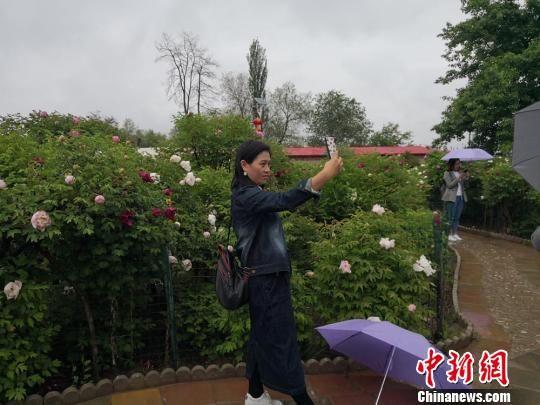 当日,临洮县迎来了入夏的首场降雨,地处县城郊区山上的车刘家村曹家坪牡丹园细雨霏霏,花开正艳。图为游人在牡丹花前自拍。 杜萍 摄