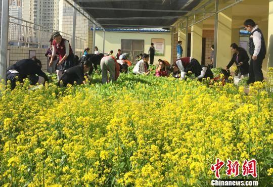 """图为兰州一小学里同学们体验""""蔬菜种植课堂""""。(资料图) 刘玉桃 摄"""