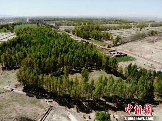 """""""彩虹山丹""""总长约为5公里,主要范围是山丹新城区去往大佛寺的沿途道路。绿地建设总面积达到2500亩,其中造林绿化700亩,种植各类花卉1800亩,栽植各类苗木40万株。 杨艳敏 摄"""