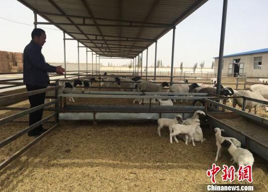 瓜州县农产品综合交易市场建成4处标准化养殖小区。 张婧 摄