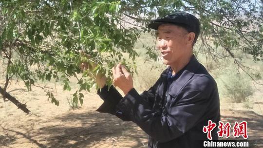 图为古浪县八步沙林场场长郭万刚,第二代治沙人。 刘玉桃 摄