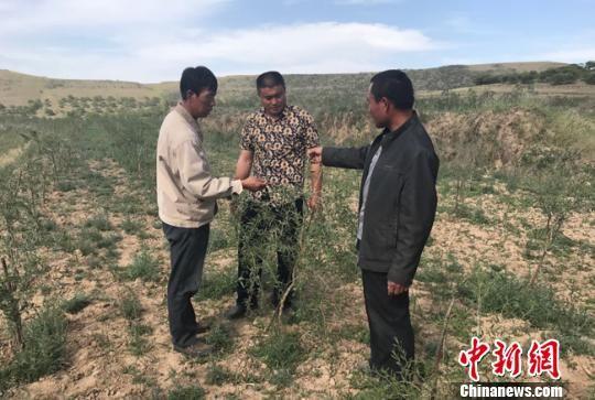 甘肃庆阳市环县车道乡王西掌村的乔建洲(右一)和当地村民交流种植枸杞的方法。 艾庆龙 摄