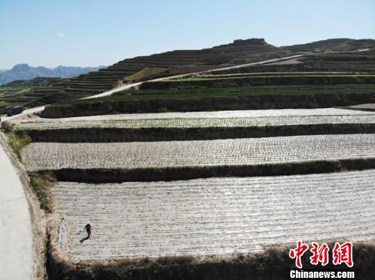航拍甘肃天水市武山县桦林镇寨子村架豆产业。 杨艳敏 摄
