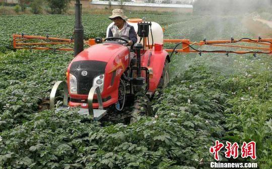 甘肃临洮县农民将耕地托管由合作社耕种和收割,农民只负责平时的田间管理模式既解决耕地撂荒,又增加农民收入。图为合作社农机正在给马铃薯喷洒追肥。(资料图) 陈得军 摄