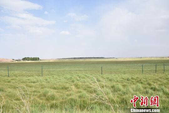图为盛夏时节的瓜州县东巴兔草原。 魏金龙 摄
