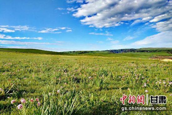 图为野花盛开的草原,分外美丽。