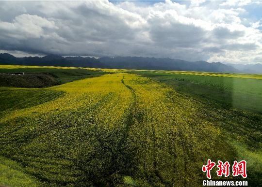 图为祁连山下山丹马场夏日风光。(资料图) 杨艳敏 摄