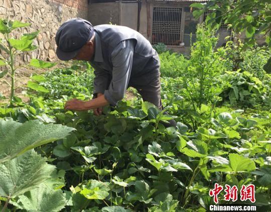 """图为80岁教场村村民陈国忠,也是""""孝心之家""""服务对象之一。 张婧 摄"""