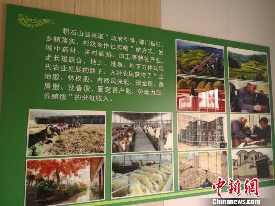图为积石山县中药材种植产业扶贫模式介绍。 南如卓玛 摄