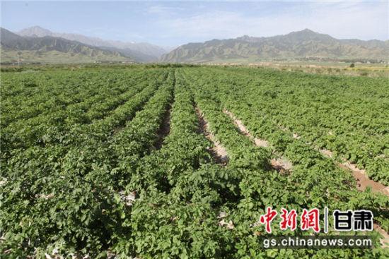 最新致富项目贫困县农产品直供高校食堂助农增收