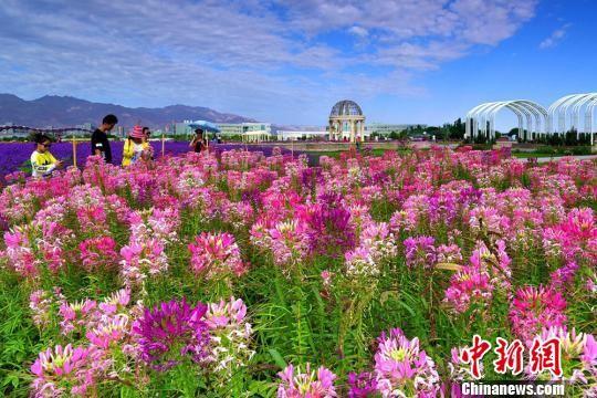 游客赏花拍照。 王永松 摄