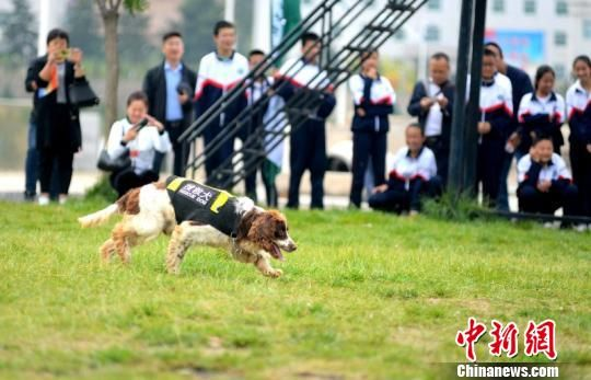 图为学生观摩搜救犬搜救演练。 南如卓玛 摄