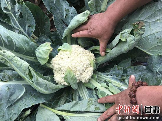 """""""零资金""""种蔬菜享"""