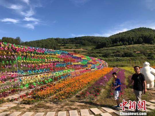 """初秋时节,甘肃甘南藏族自治州正值旅游旺季,成片的花海分布在藏寨的周围,""""花经济""""已然成了当地旅游的另一热点。 徐雪 摄"""