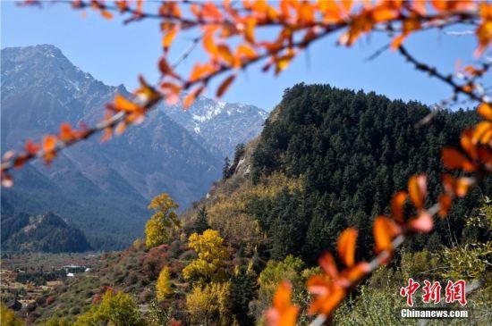 金秋十月,位于祁连山北麓的张掖市肃南裕固族自治县马蹄藏族乡美不胜收。王将