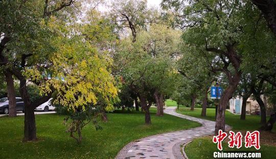 """华润雪花啤酒(甘肃)有限公司兰州工厂在建厂时,保留了原来部分枣林,现在这187棵枣树将工厂""""打扮""""的绿意盎然。 杜萍 摄"""