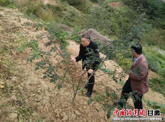 陇南市税务干部到西和县石峡镇土桥村扶贫点查看花椒产业区情况。