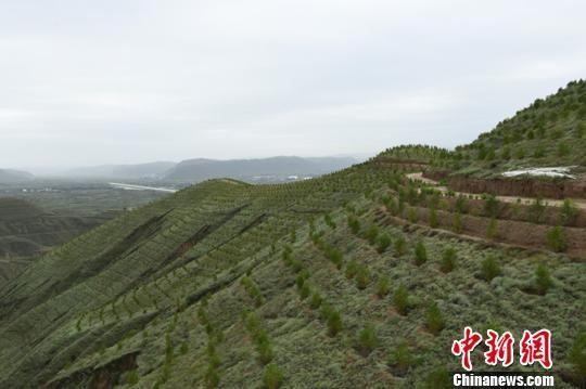 图为曾经的黄土地现在绿植遍野。(资料图) 赵江梅 摄