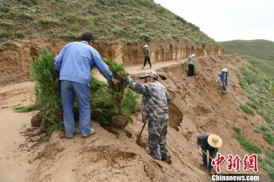 图为张成宝和同事们在山间种树。(资料图) 赵江梅 摄