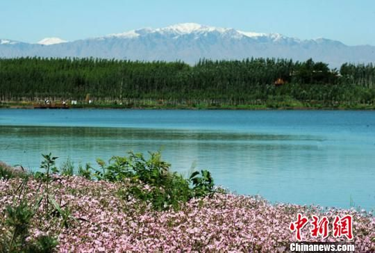 图为张掖湿地优美风光。(资料图) 杨艳敏 摄