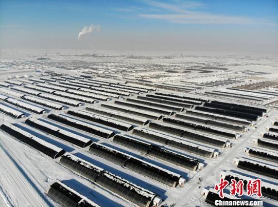 图为12月8日,酒泉戈壁滩上一座座现代化的日光温室大棚,整齐排列着嵌入周边皑皑白雪中,高空俯瞰尤为壮观。 杨艳敏 摄