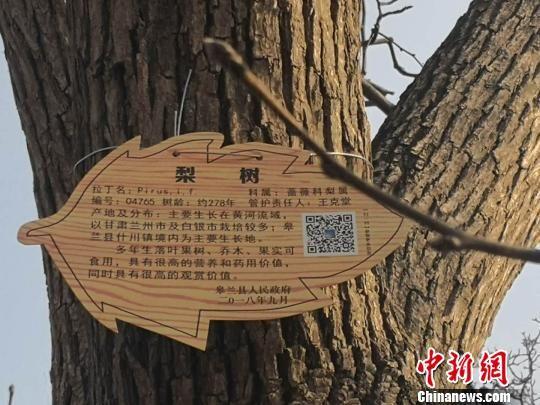 图为印有二维码的百年古树新标牌。 史静静 摄