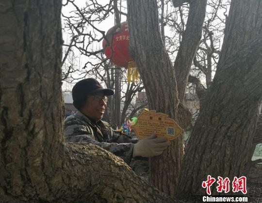 目前,9200余株百年梨树全部完成挂牌工作。图为工作人员正在给古树挂新标牌。 史静静 摄