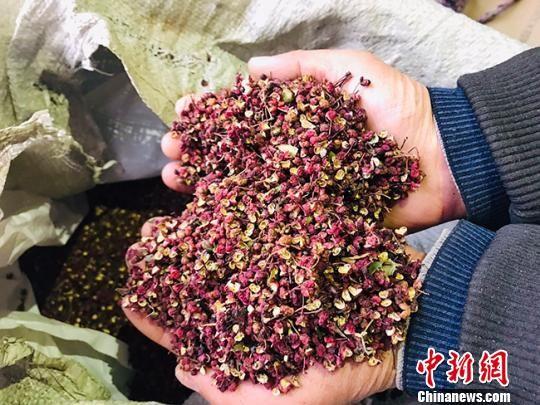 图为祁杨村村民采摘的花椒。 艾庆龙 摄