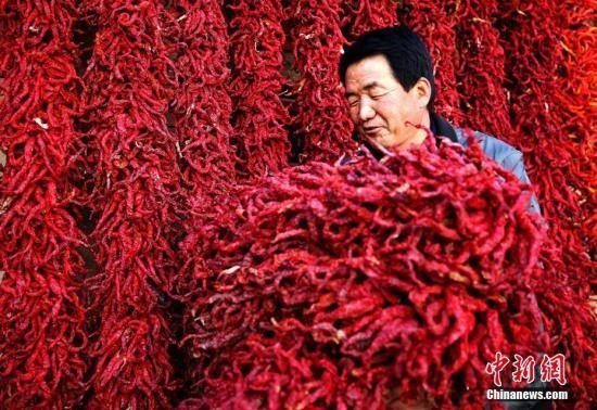资料图:甘肃武山县咀头高山辣椒产业。陈治平 摄