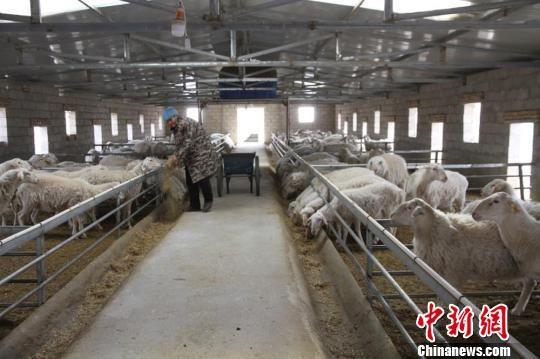 图为环县乡味缘种植养殖农民专业合作社。 钟欣 摄
