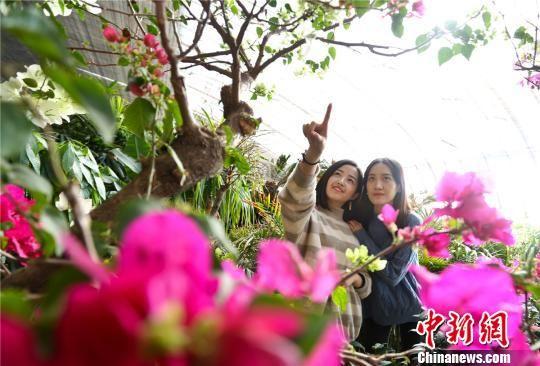 图为市民们欣赏盛开的鲜花。 王将 摄