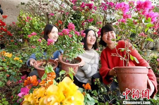 甘肃戈壁名城张掖万盆鲜花盛开迎新春