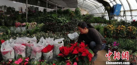 图为俞桂英打理她的花卉。 马爱彬 摄