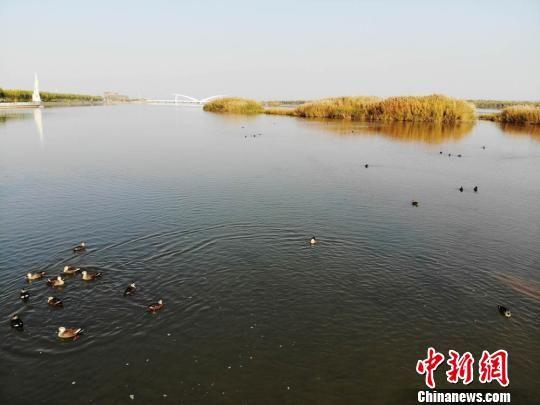 甘肃张掖市高台县戈壁上的黑河湿地水映秋色美。(资料图) 杨艳敏 摄