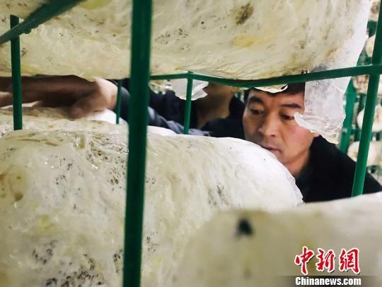 图为在甘肃兰州市榆中县马坡乡尖山村建设的食用菌种植工厂。 艾庆龙 摄